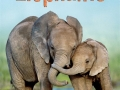 beginners-elephants