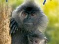 beginners-monkeys