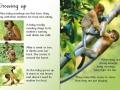 beginners-monkeys1