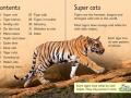 beginners-tigers1