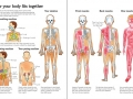 How-your-body-works3