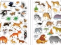 9781409597476-first-sticker-book-nature3