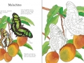 butterflies to colour1