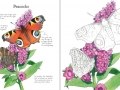 butterflies to colour2