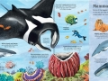 big book of sea creature1