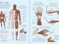 human body sb1