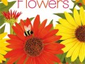 03-flowers-young-beginners