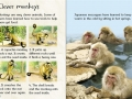 beginners-monkeys.2