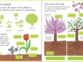 9781409593584-my-first-book-about-how-things-grow2