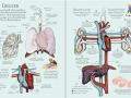 human body sb2
