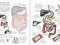 human body sb3